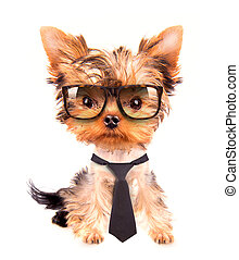business dog with tie and glasses on white