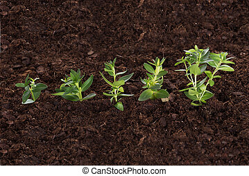 Business growth concept. Green saplings in soil