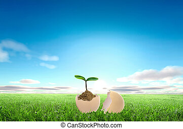 Business growth concept with ypoung plant and soil on white...