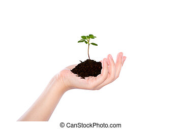 Business hand holding green small plant