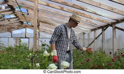 business., jardinier, sien, touchers, fleurs, petit, par,...