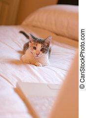 business kitten