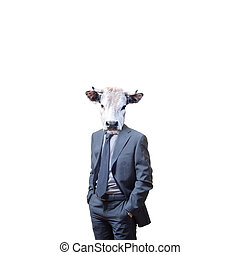 business man with bull head on white background