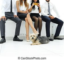 business team and a faithful dog lying on the floor