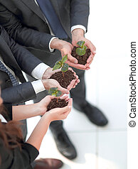 business team is holding in their hands the fragile sprouts...