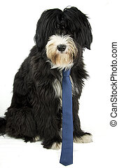 businessdog