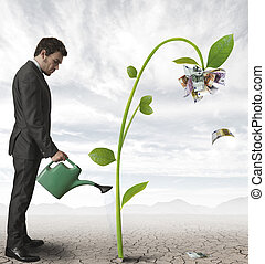 Businessman and a plant of money - Businessman watering a...