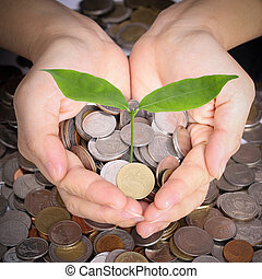 Businessman cover growing plant with coin money