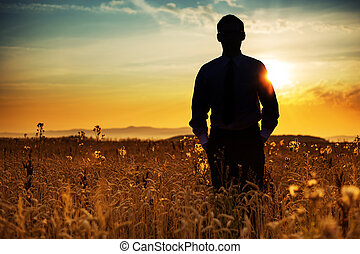 Businessman silhouette among the corn
