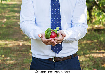 businessman with red peach - businessman at work with red...