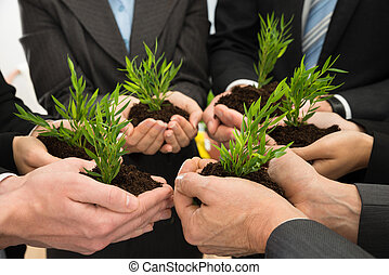 Businesspeople Hands With Plant And Soil