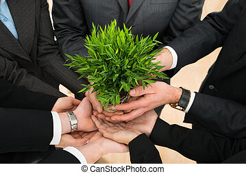 businesspeople, mãos, segurando, planta