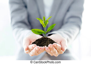 Businesswoman holding a plant isolated on a white background