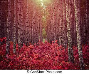 buskar, använd, sol, fura, morgon, mörk, skog, backgro, röd