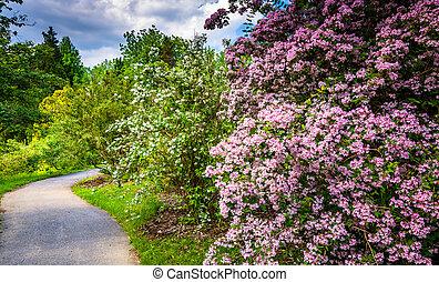 buskar, b, färgrik, cylburn, träd, arboretum, bana, längs
