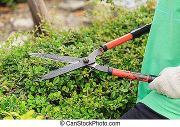 buskar, garden., beskärning