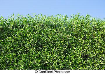 buskar, grön