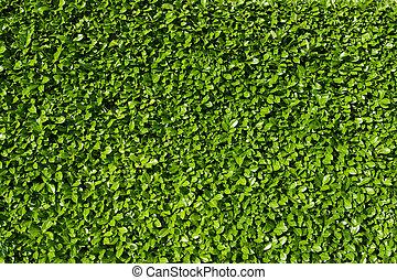 buskar, lager, häck, grönt lämnar