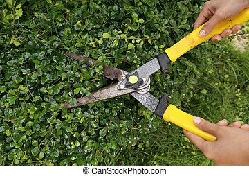 buskar, sax, trädgård, trimning