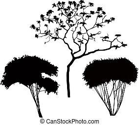 buskar, träd