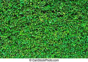 buskhäck, grön fond