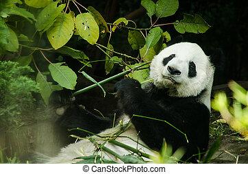 Busted panda