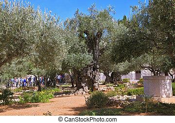 Bustling walking tour in Garden of Gethsemane - JERUSALEM,...