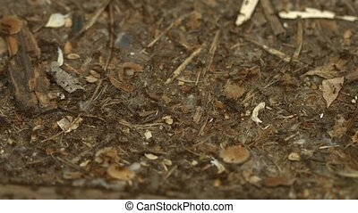 Busy Ants Moving - Busy ants moving about on the ground. A...