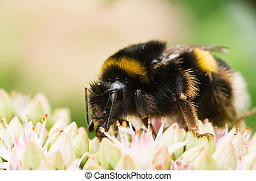 Busy being a bumble bee
