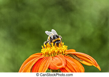 Busy Bumble Bee