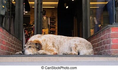 Busy city and animal on side. Busy shopping street in Athens, Greece. City life on busy working day. Dog in the city. Dog sleeping near shop door while passers-by are in a hurry. Unique in the crowd