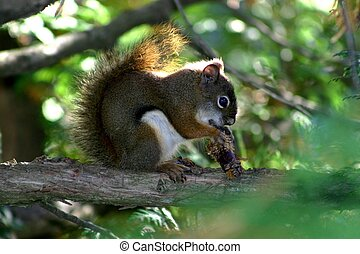 Busy squirrel - Squirrel on branch eating an acorn