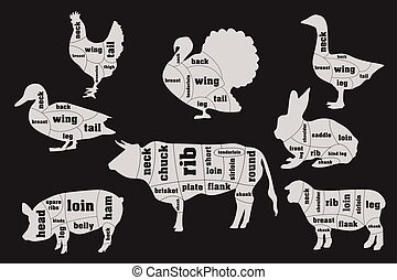Butcher meat cuts infographic set, vector