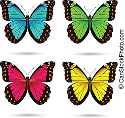 butteflies, variopinto