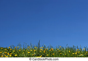 Buttercup Skyline