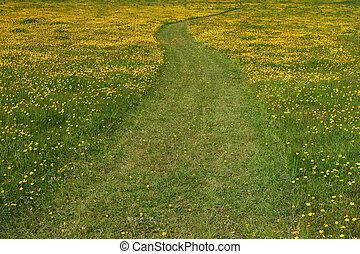 Buttercup Walkway