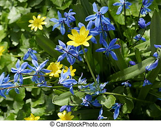 Buttercups and wild Hyacinth in a field.