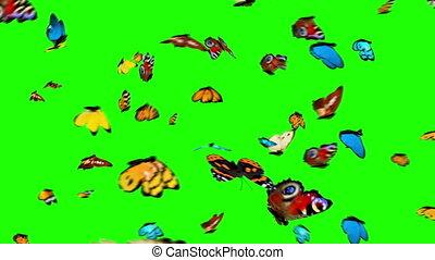 butterflies, летающий, зеленый, задний план