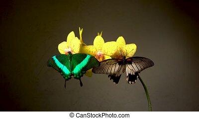 butterflies, цветок