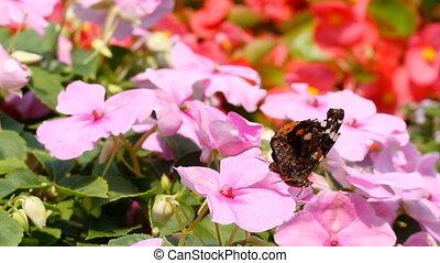 butterflies, цветы