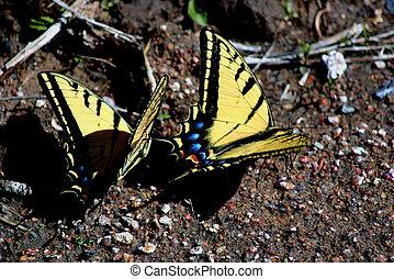 Butterflies 4546