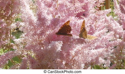 Butterflies and pink flowers on the meadow