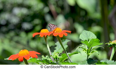 Butterflies and Zinnia Elegans Flowers