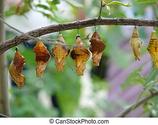 Butterflies are