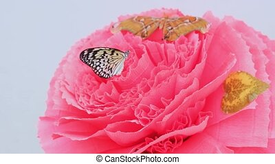 Butterflies are sitting on a large pink flower. The male hand takes one butterfly.