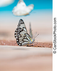 Butterflies by the water
