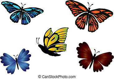 butterflies colored