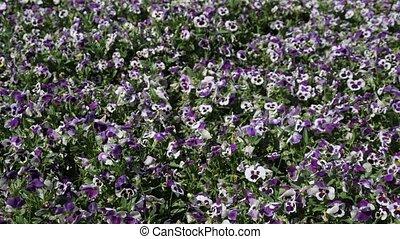Butterflies flutter over the flowers in the garden on a ...
