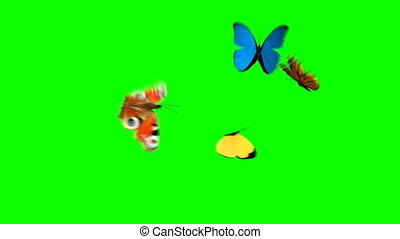 Butterflies Fly on a Green Background. Two Beautiful 3d...