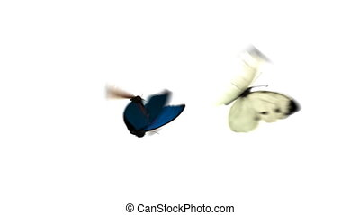 Butterflies Fly One After Another on a Green Background. Two...